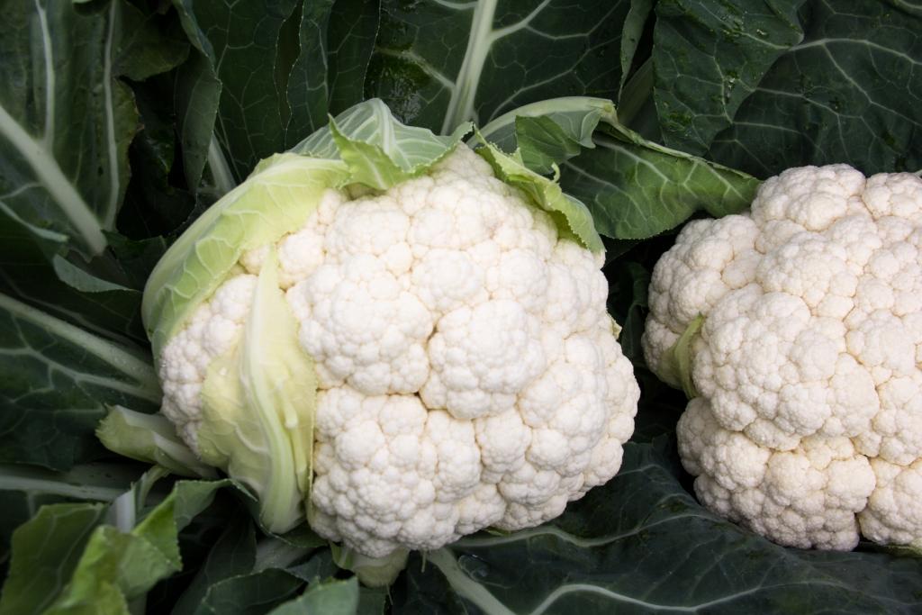 Vivavera | Légumes Potager | Chou fleur